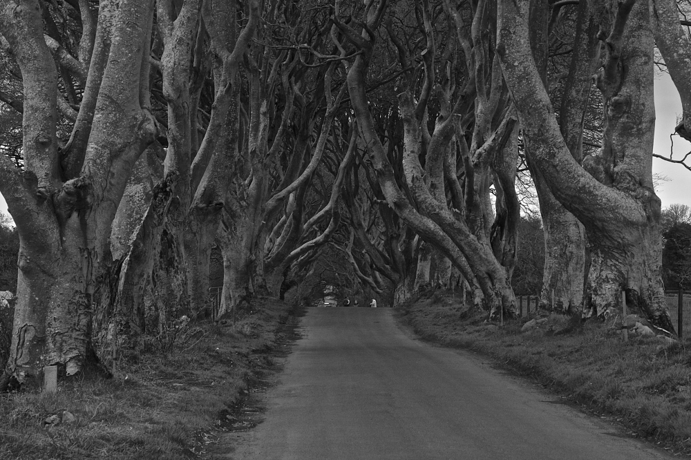Game Of Thrones - The Dark Hedges
