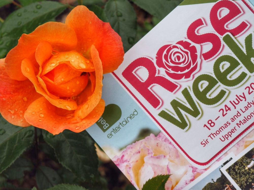 Rose Week Lady Dixon Park 2016
