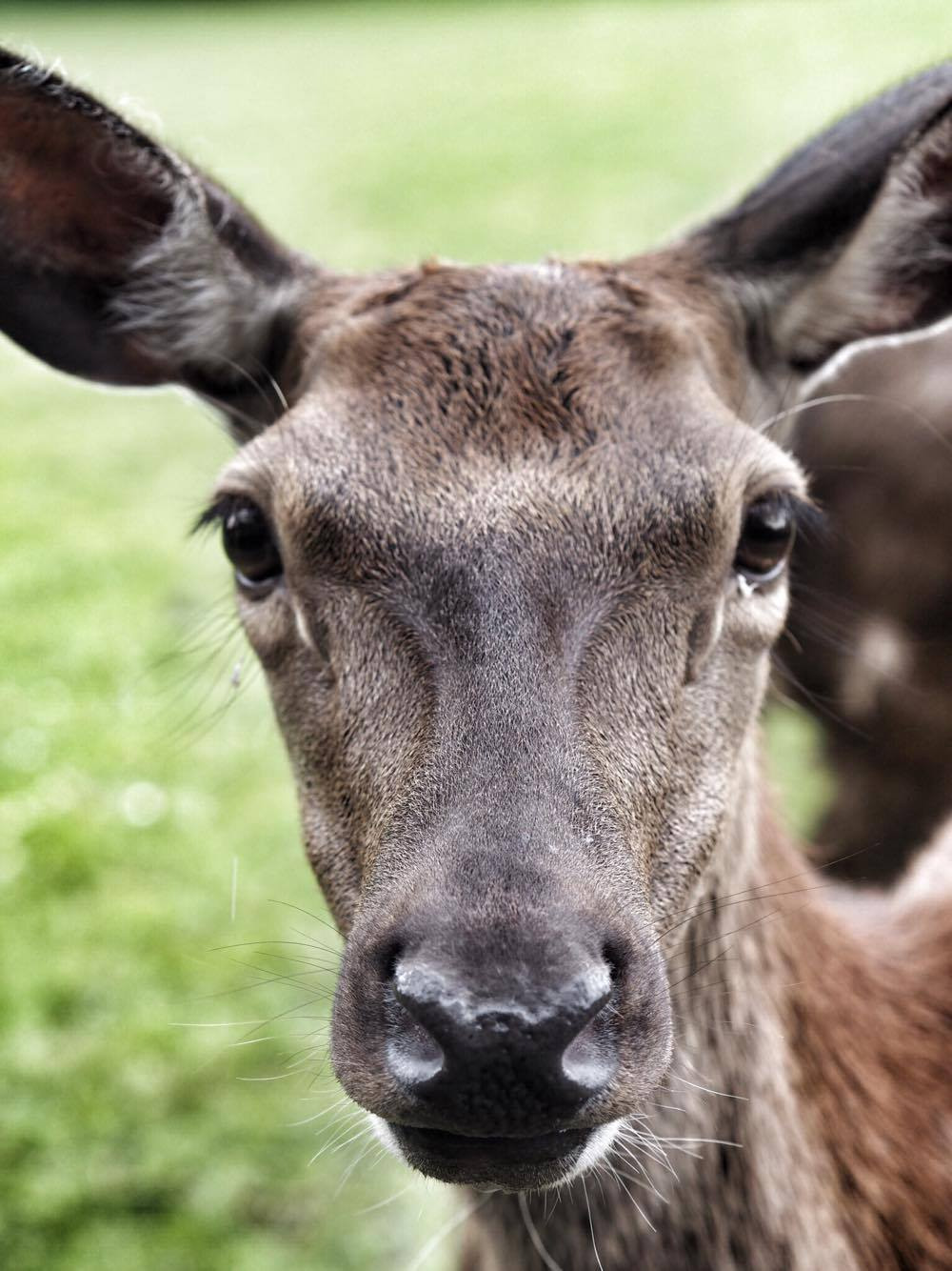 Streamvale Open Farm Red Deer