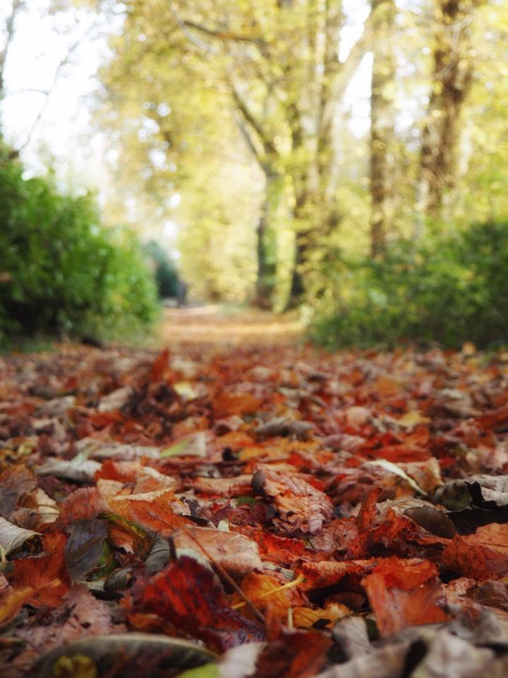 Autumn Cave Hill.jpg