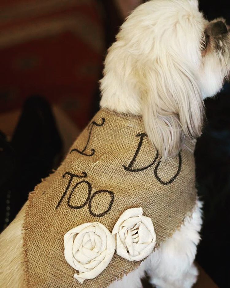 dog-of-honour-i-do-too